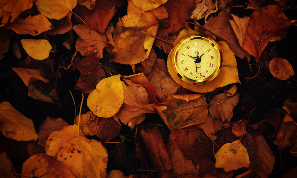 Photo in Nature #autumn #watch #color #yellow #orange #time #sec