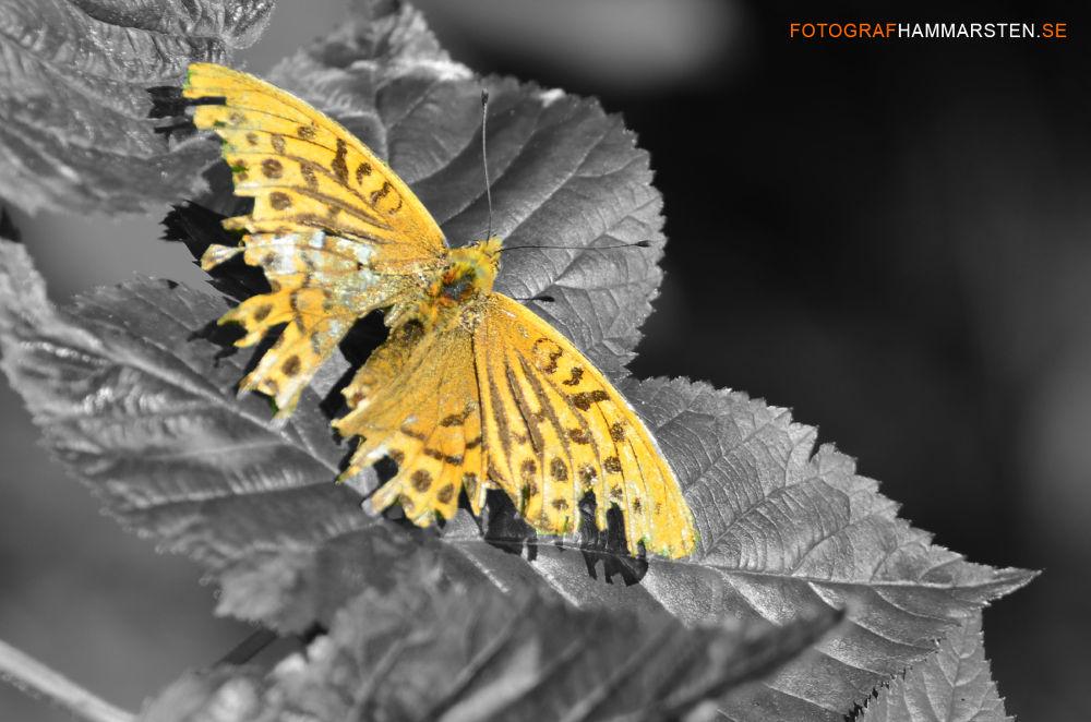 butterfly by tommytechno