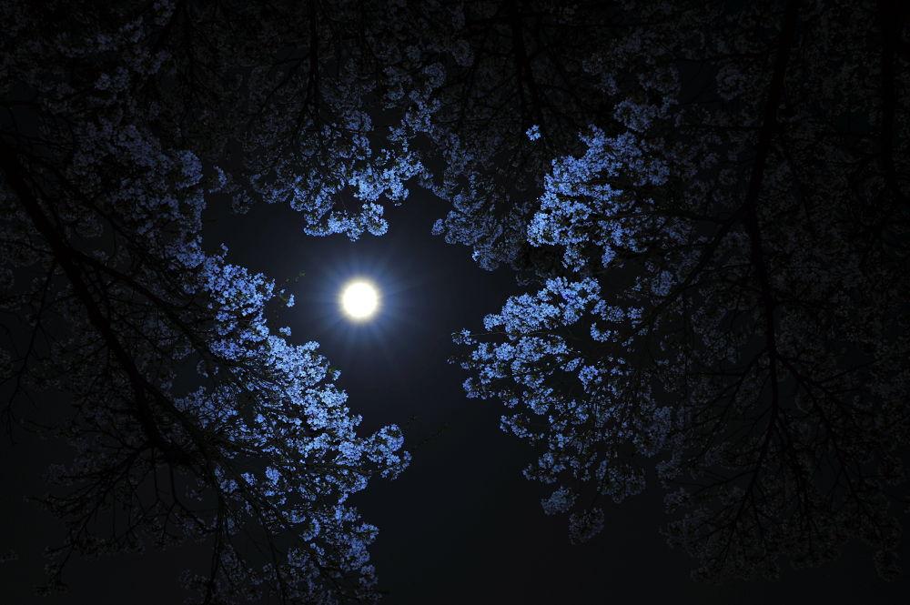 Full moon by Syuki Eita