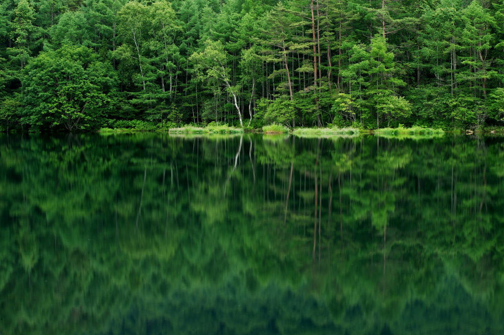 Forests and lakes by Syuki Eita
