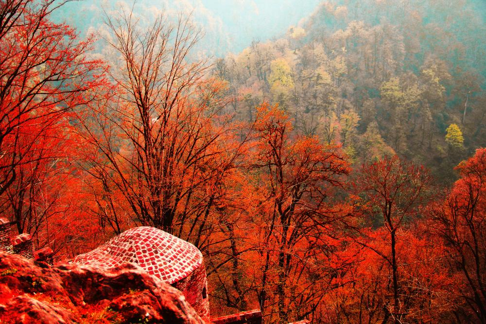 Forest Red by Mohammad Hashemi