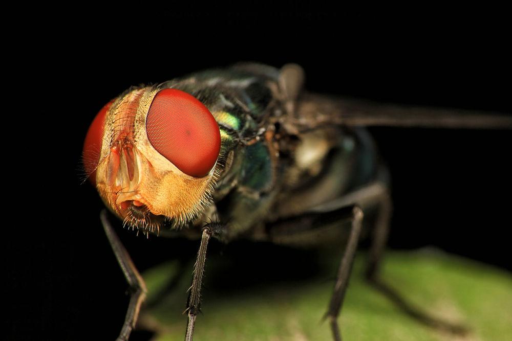 Fly Face by Franciscus Satriya Wicaksana