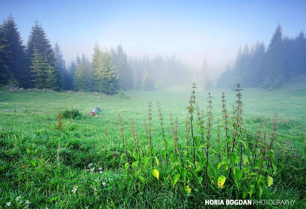 Padis mists by Horia Bogdan