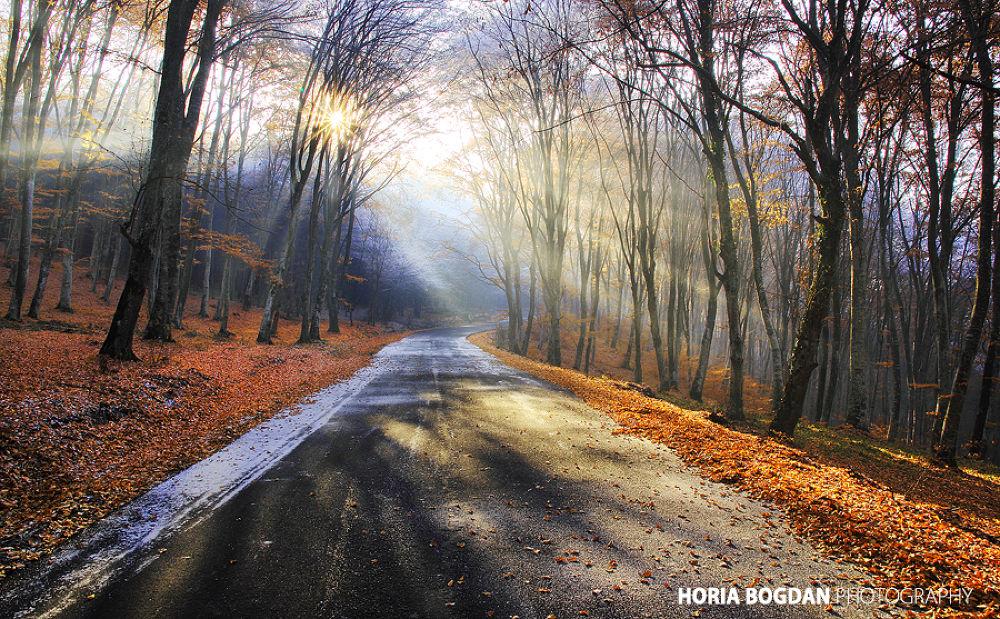 Photo in Landscape #road #season #fog #sun #winter #autumn #fall #forest #woods #trees #nature #romania