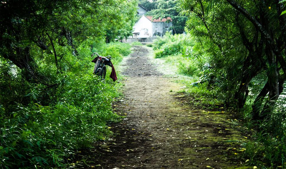 Green Corridor by Alfadin