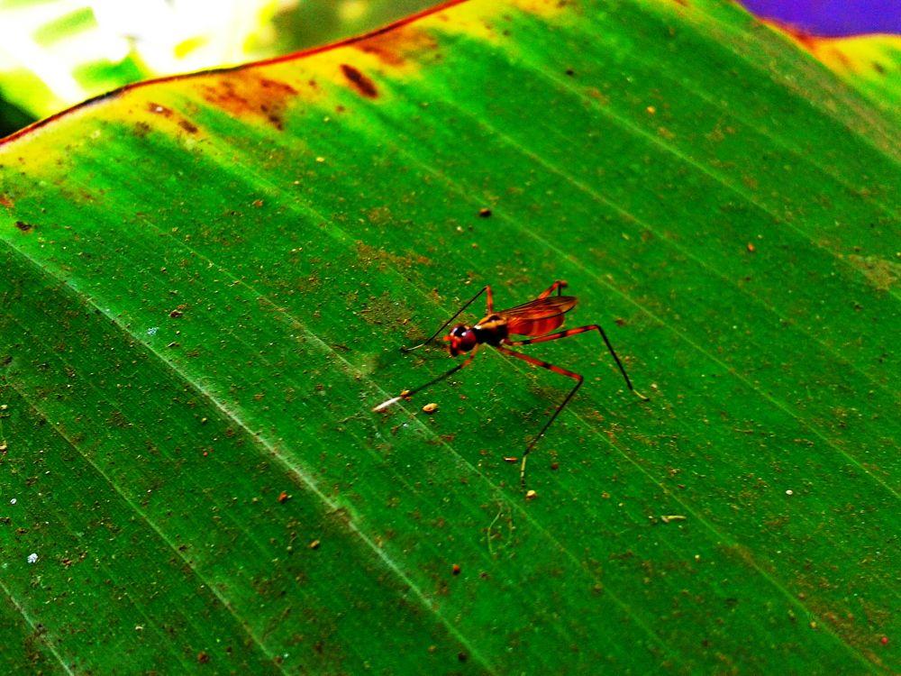 Insect by saravanayuvaraj