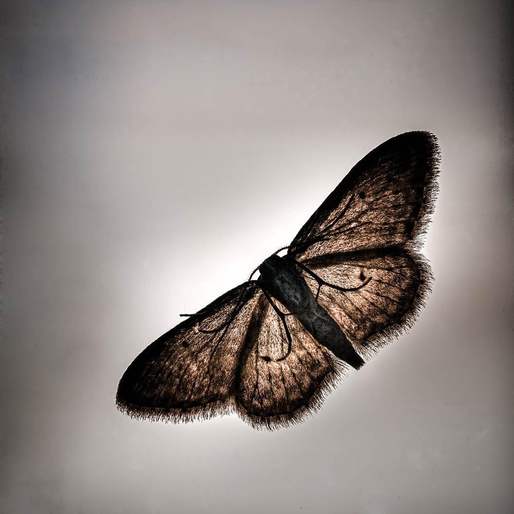 Papillonnerie by PierreNadler