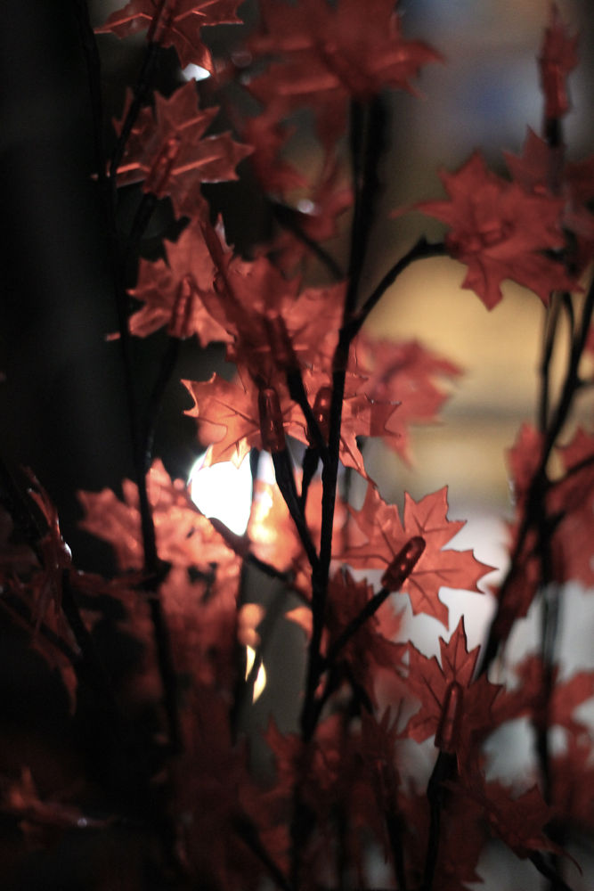 Winterlights by GBlitzt