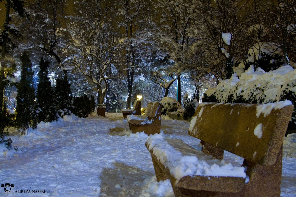 niavaran park by alireza naseri