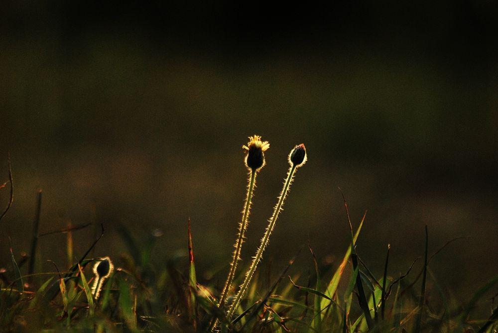 shine on grass root by sadatshameem