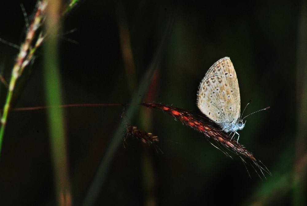 laser grass blue by sadatshameem