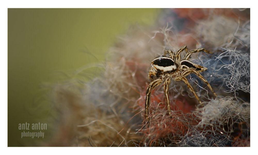 spider by Angela studio