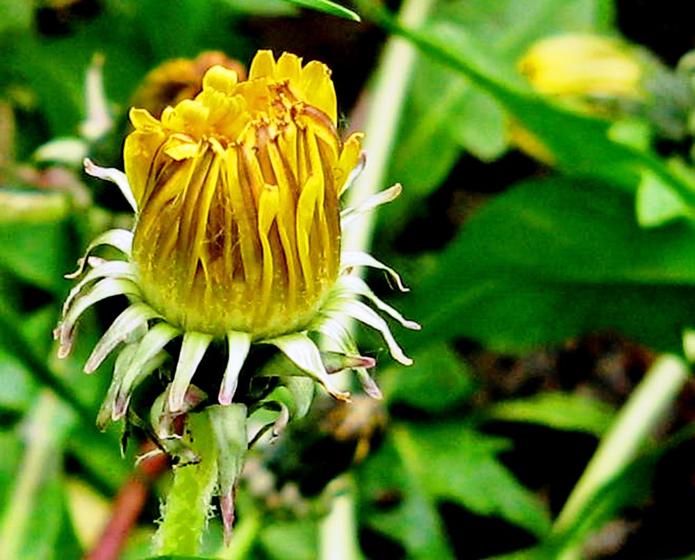 Bloom by ramikaiali