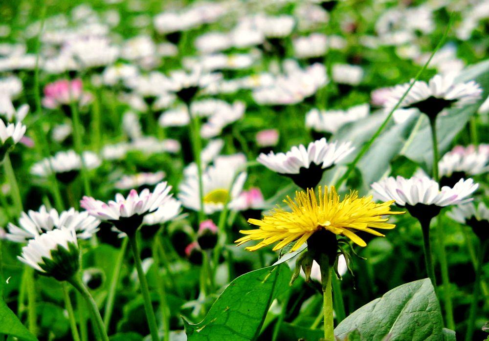 Spring by ramikaiali