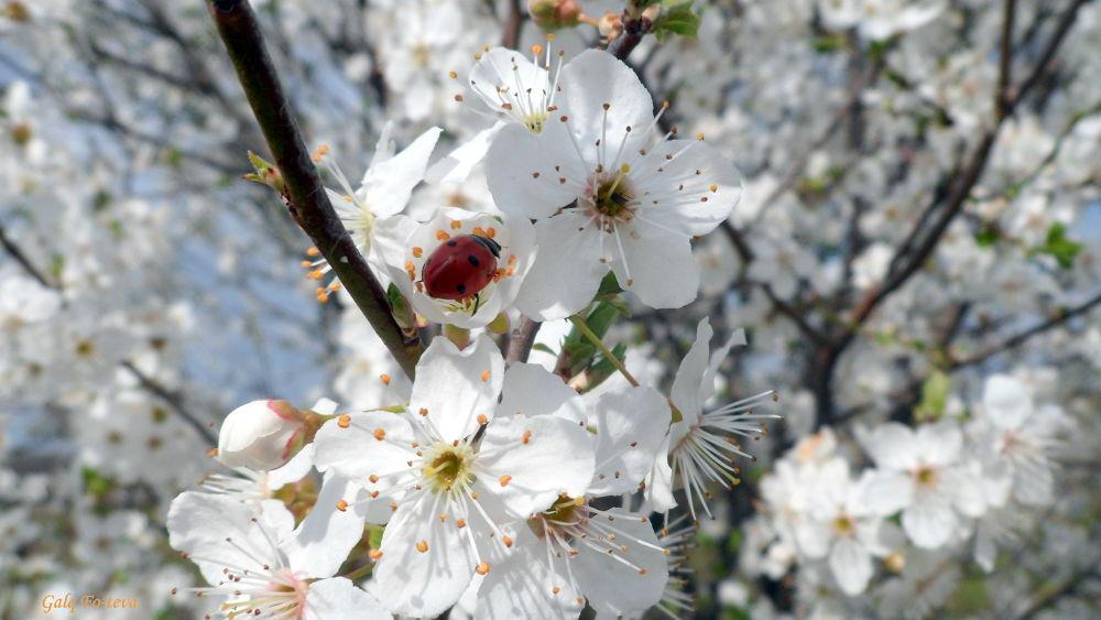 Spring by Galq Fo-teva