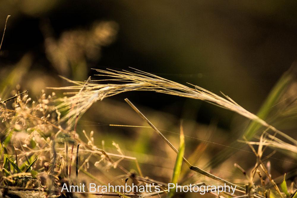Sun Light by abrahmbhatt2