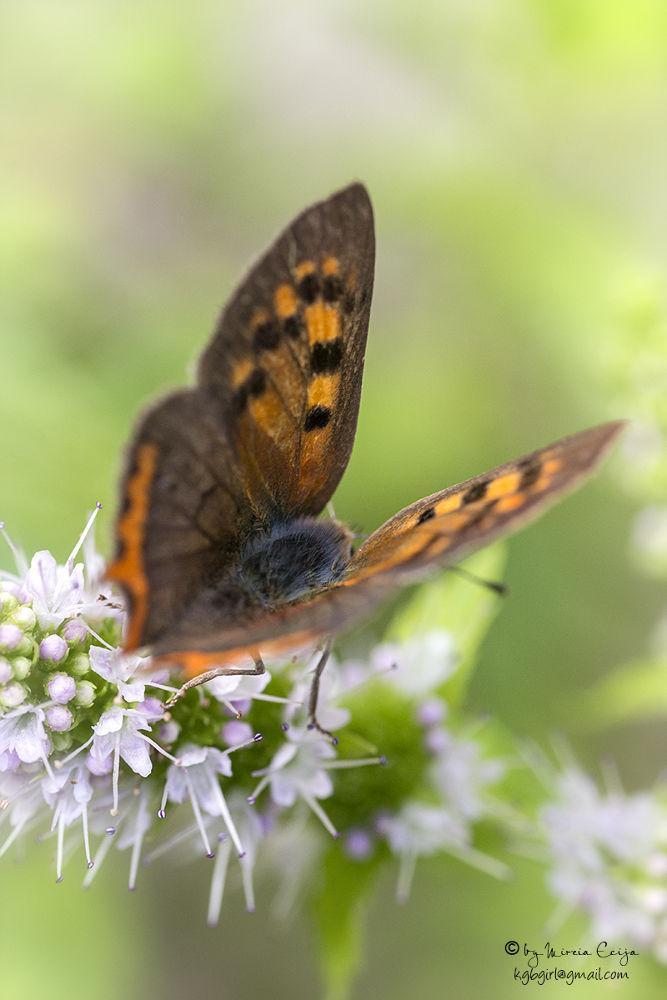 Photo in Macro #beautiful butterfly #butterfly