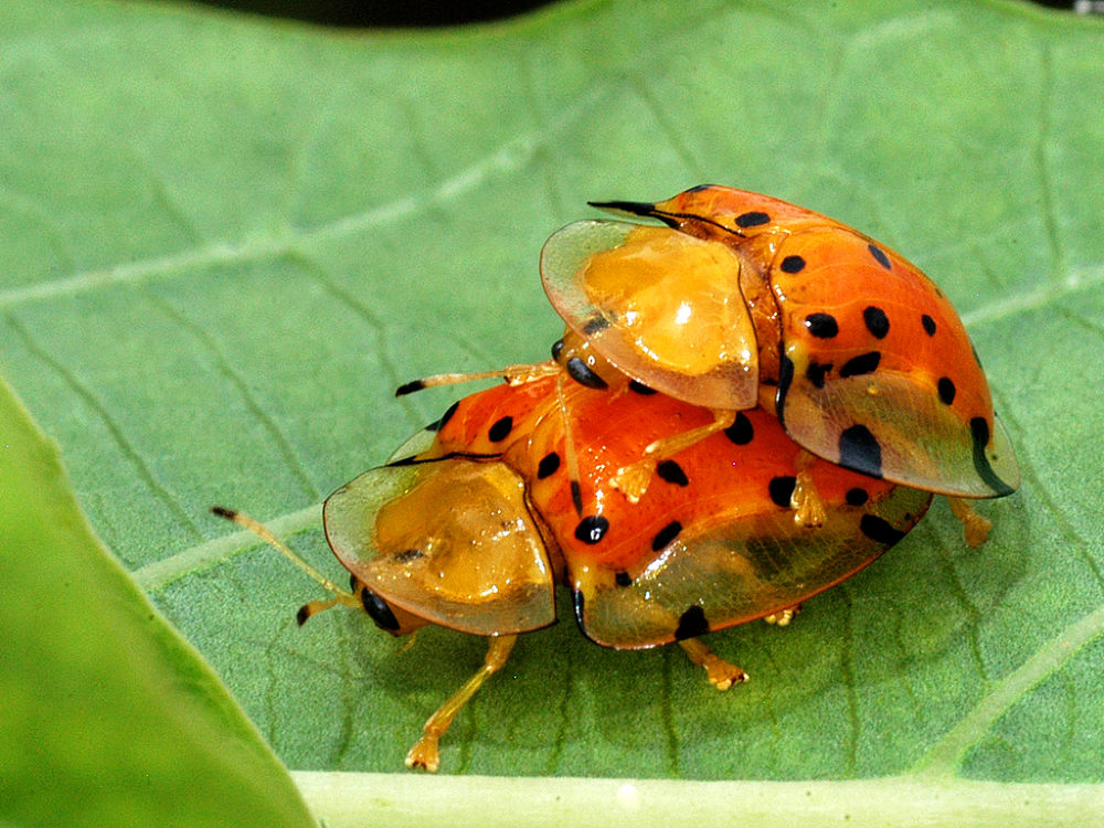 AI-PANNALA-JAGAN-MATING BEAUTIES by DRJAGANPANNALA