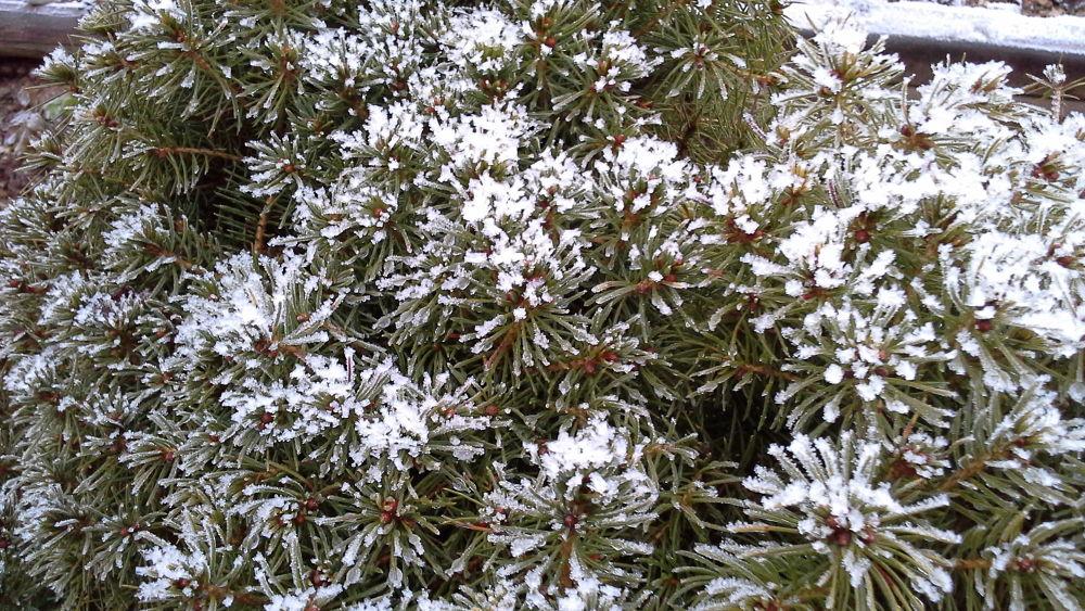 Advent of Snow by zara azit
