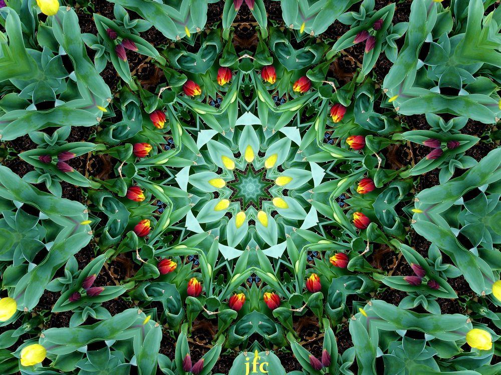 Image4    Daffodils meditation time by johnfalconcostanzo