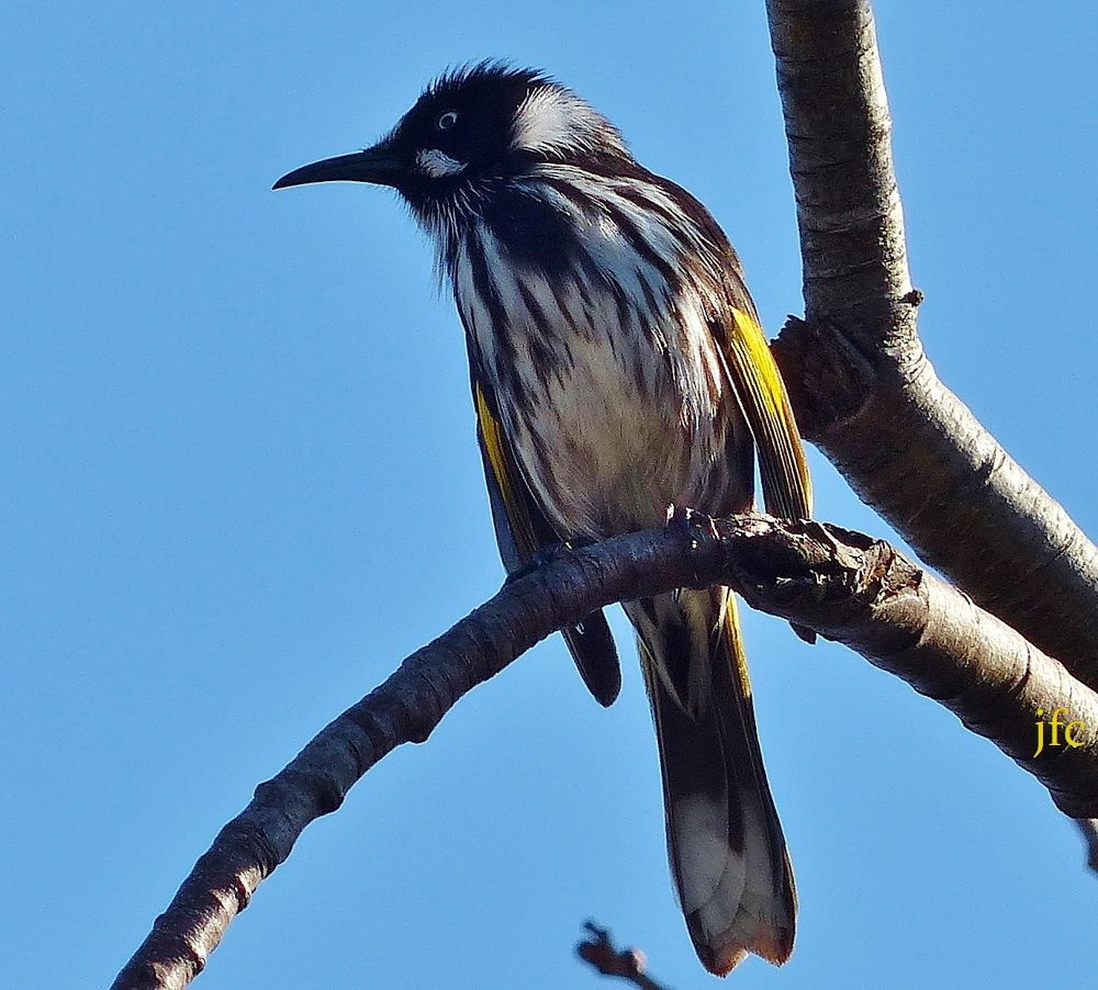 P1000499   sun bird by johnfalconcostanzo