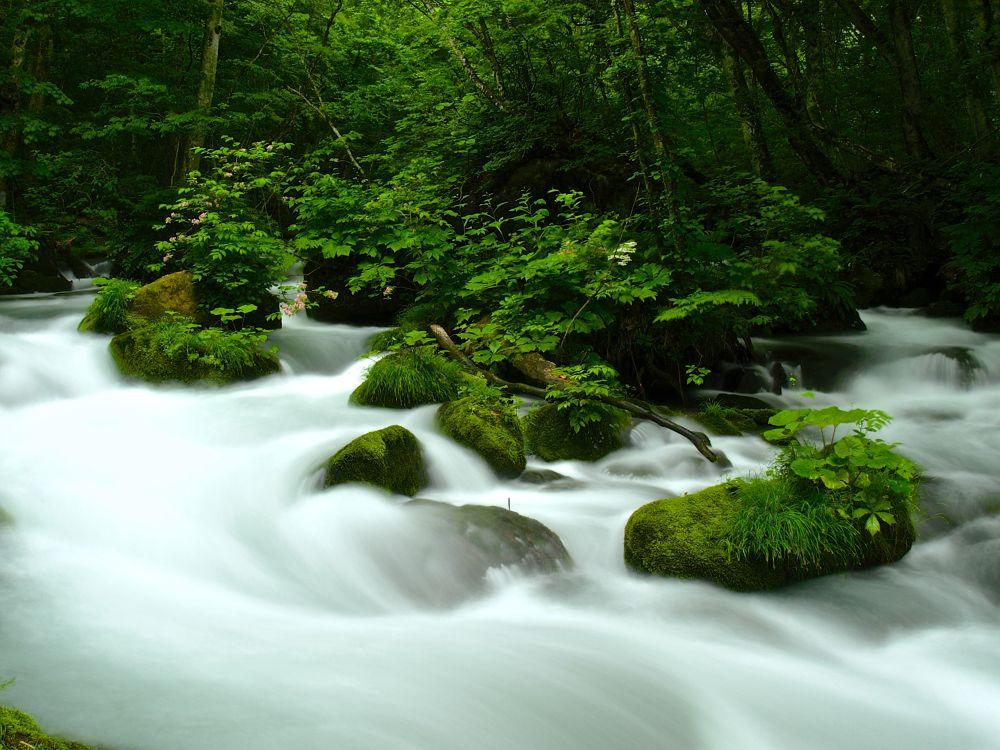 cream creek by SyuzoTsushima