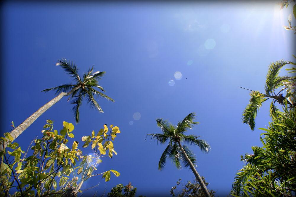 palmera by wjarafotos