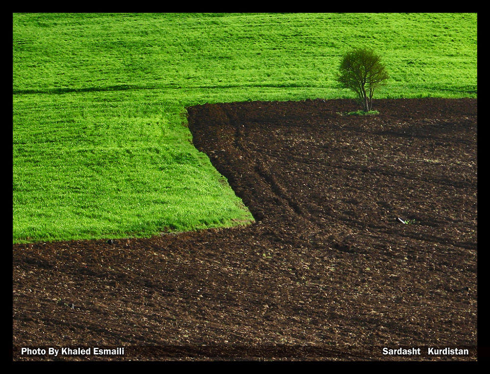The Farm by KhaledEsmaili