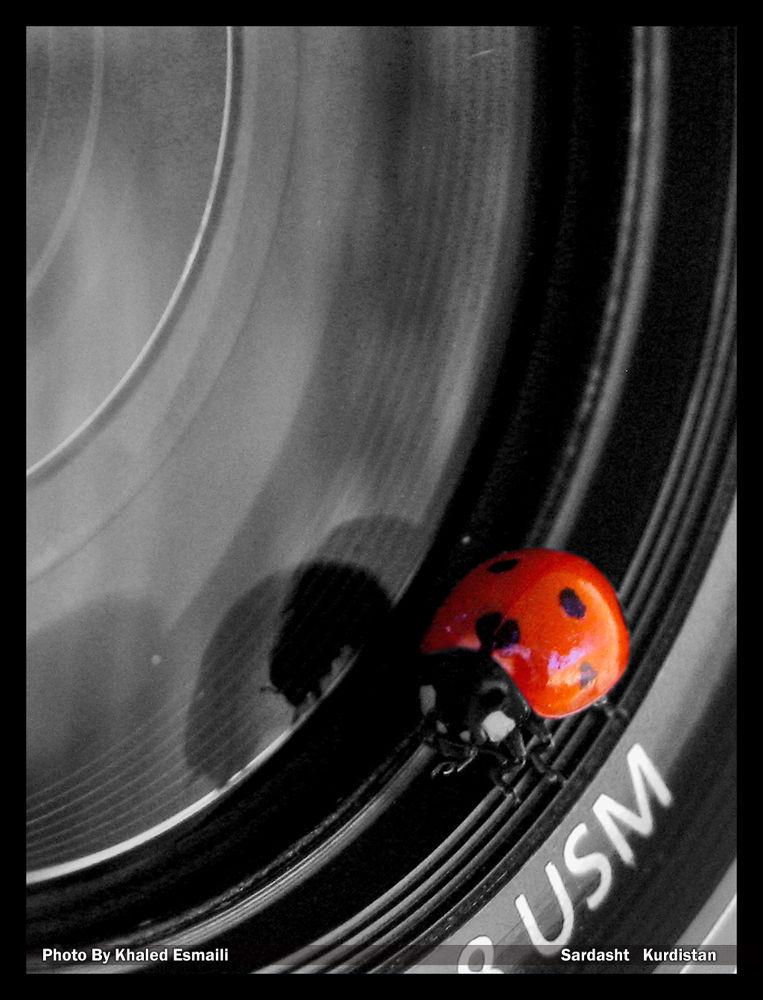 Ladybirds by KhaledEsmaili