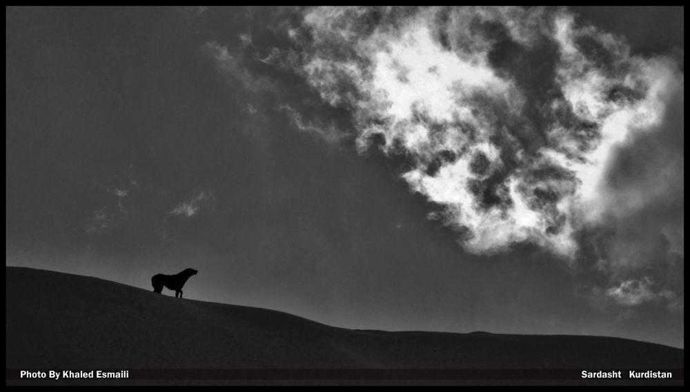 Loyal Friend by KhaledEsmaili