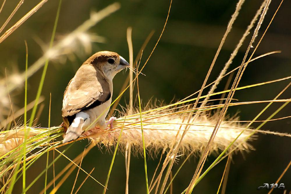 Photo in Animal #animal #bird #wild life #dubai #canon
