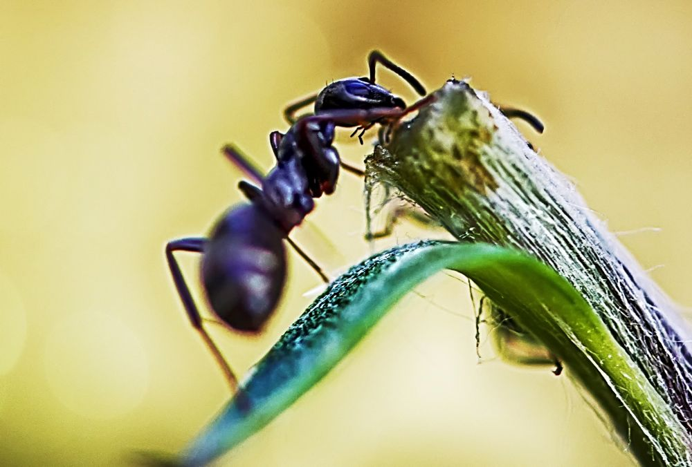 The Ant by Alexander Arntsen