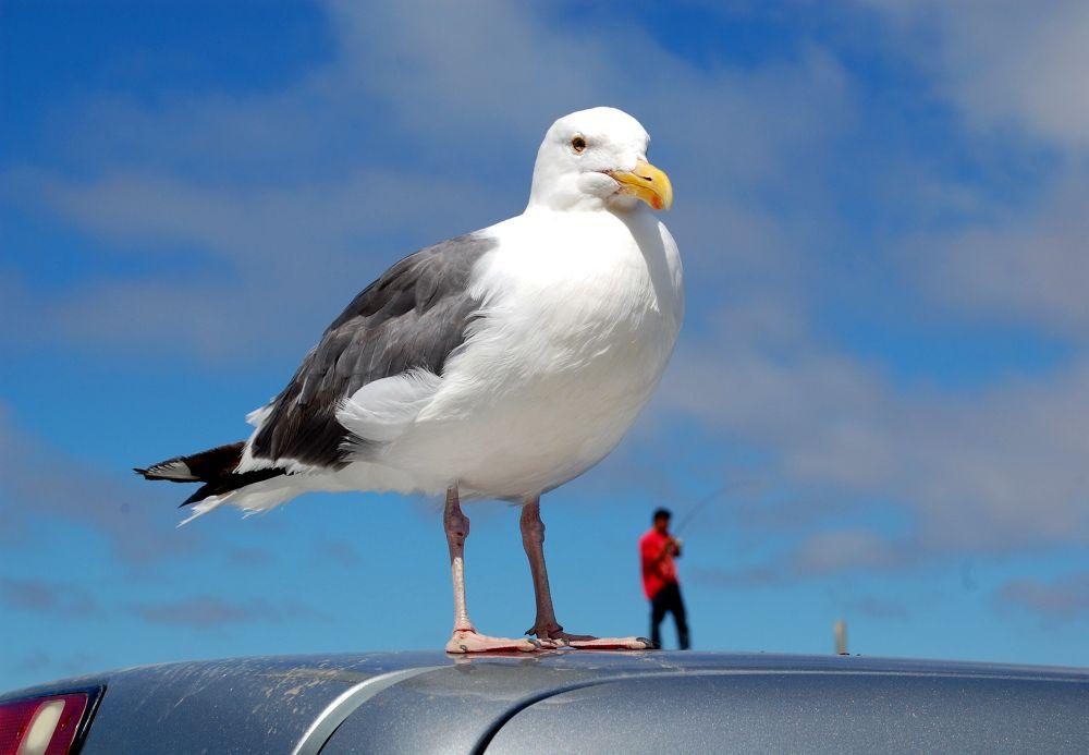birdy by manuel patti