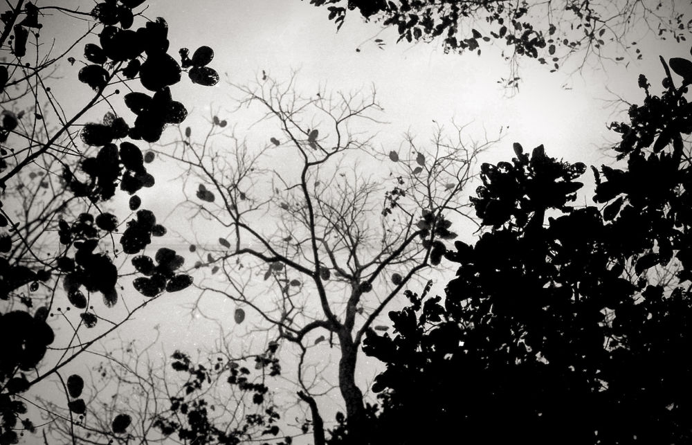 Leaf by sommukherjee