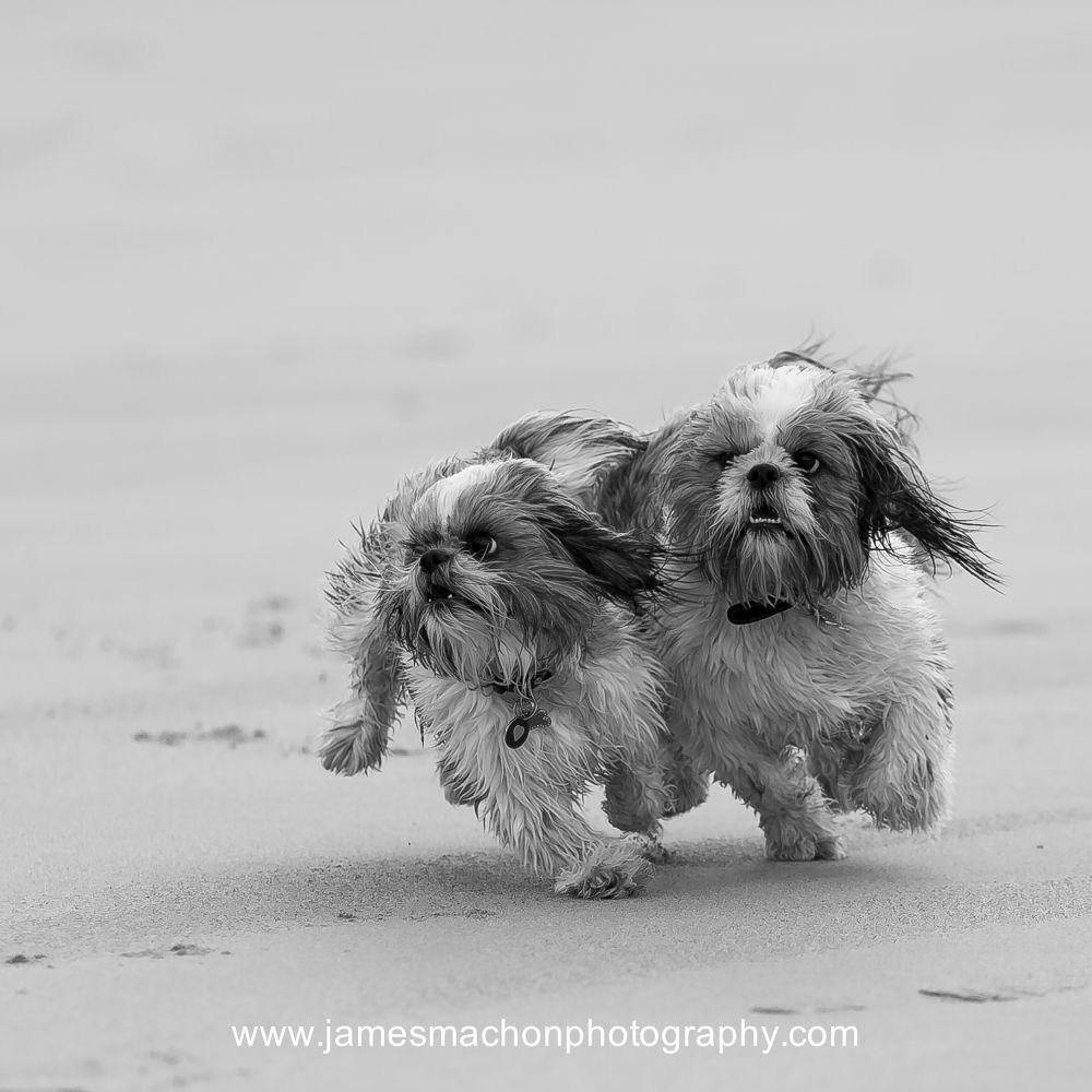 Honey & Benson by James Machon Photography