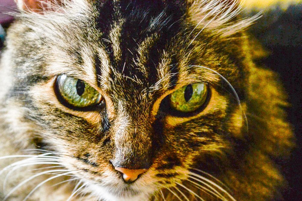 Photo in Animal #animal #felino #gato #cat