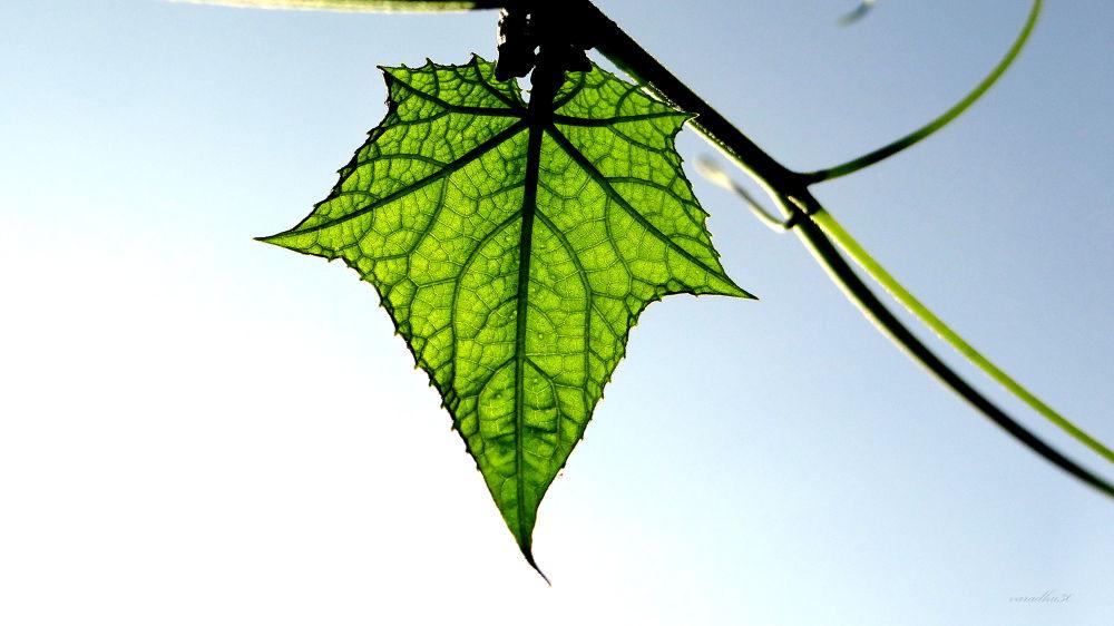 green by varadharajan90