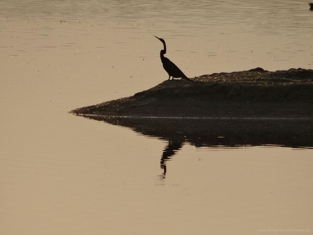 Black bird by varadharajan90