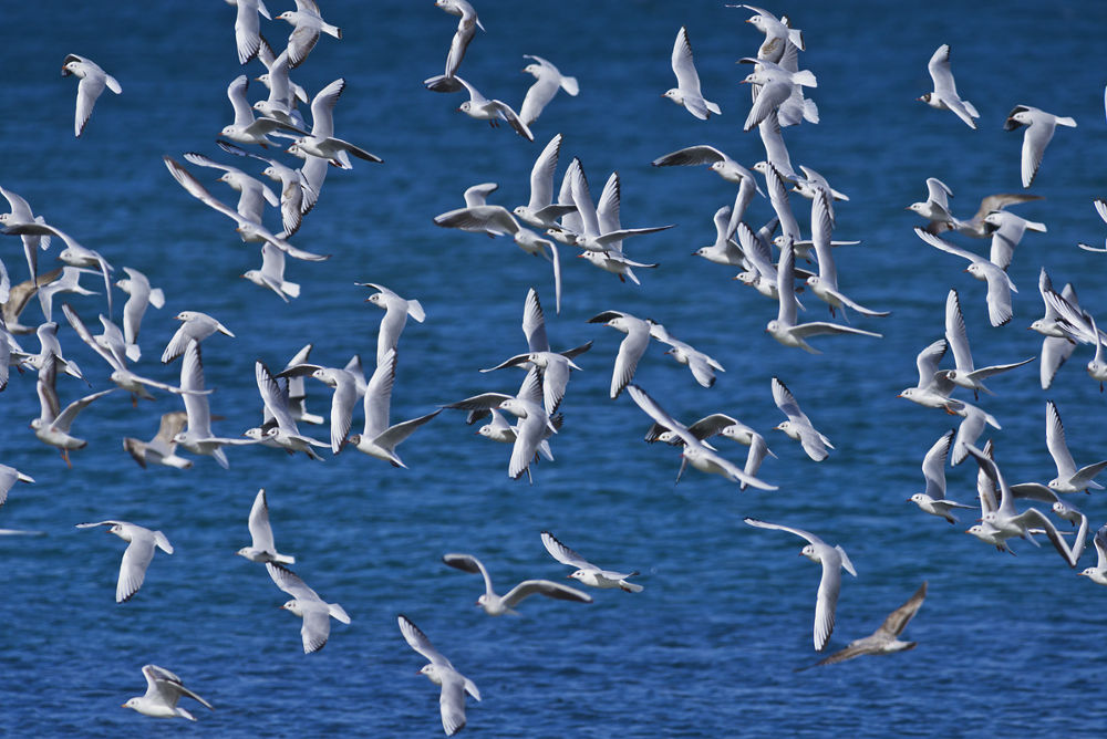 Fleet of Sea-gulls by cheko