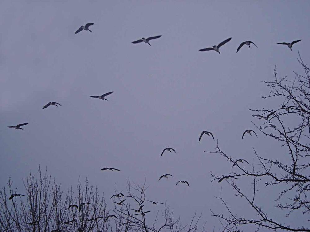 Birdland by Corey Black