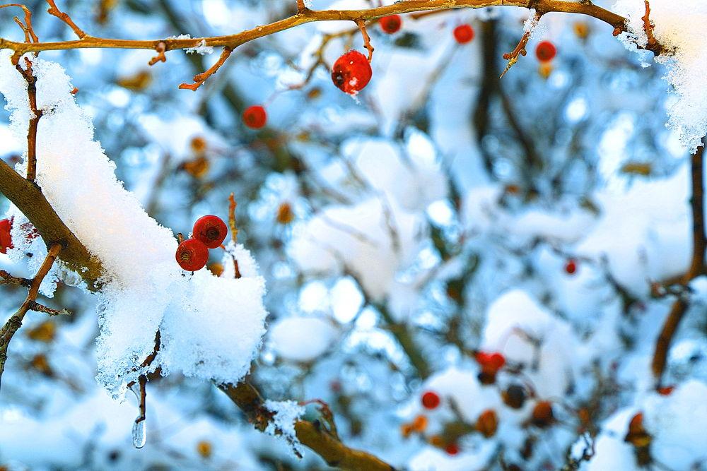 زمستان by ali saffari