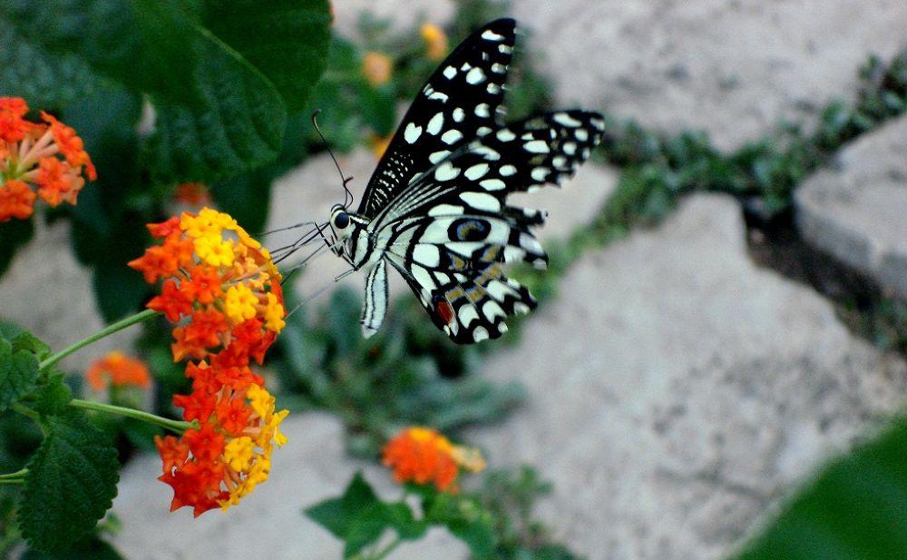 eram garden,shiraz,iran by hsnrafati