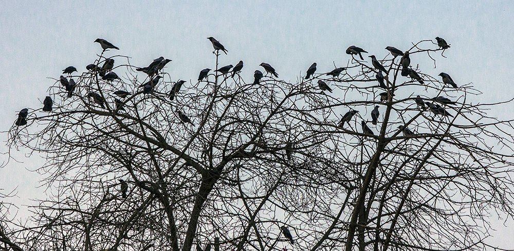 The crows - City of angels by Mohamed Mostafa Photography