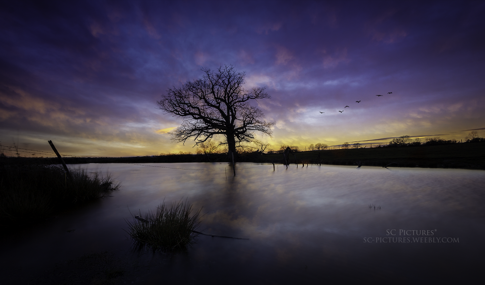 Colors of evening by scpictures