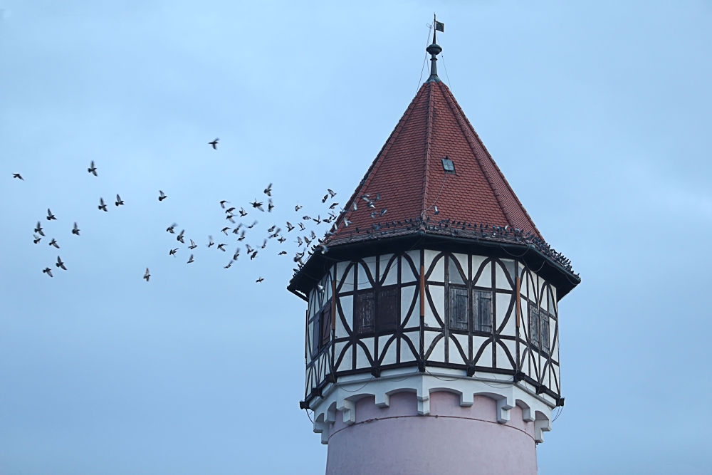 Photo in Architecture #birds #water #tower #brezice #sunday #slovenia