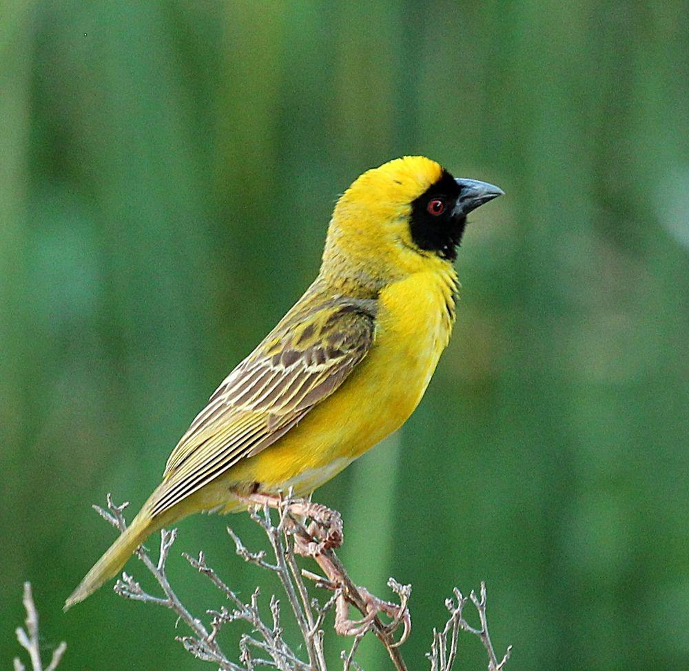 bird by ABRossouw