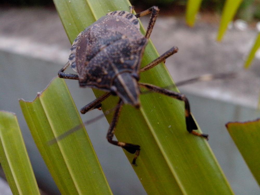 bug by Mahesh Vaingankar