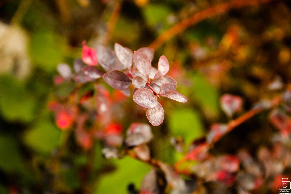 Purple leaves   by Milad Nady