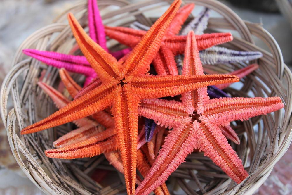 Starfish Souvenir  by Efeew