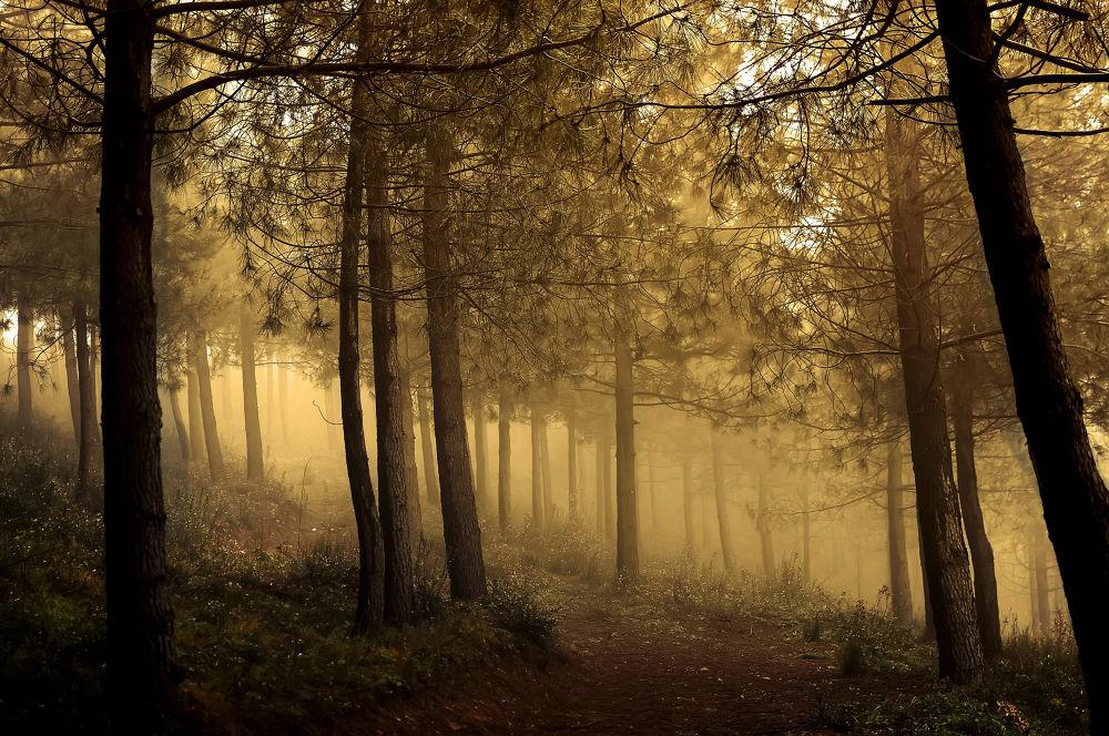 fog by yucelcetin